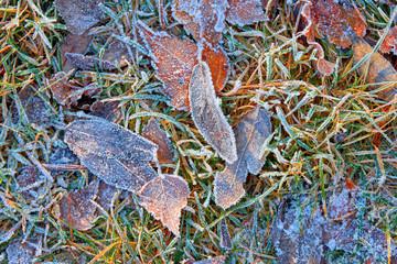 Blätter mit Rauhreif