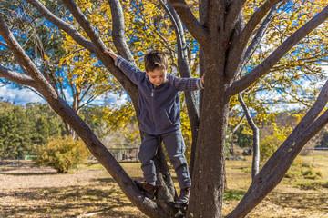 Small boy climbing a tree in Australia.