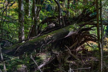長野県・南木曽 / 自然 / 山 / 森のイメージ