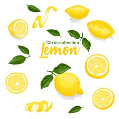 Color set of hand drawn tropical citrus fruit. Lemon. Ink sketch style. Good idea for templates menu, recipes, greeting cards.