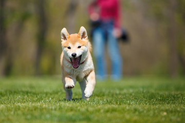 dog running on the grass