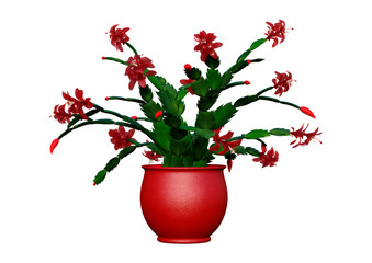 3D Rendering Christmas Cactus on White