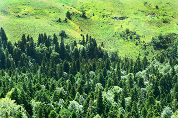 Evergreen forest. Spruces, firs and pine trees. View from above. Natural background.