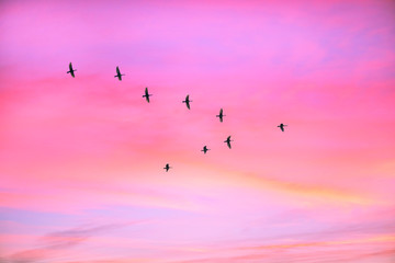 Printed roller blinds Bird Migratory birds flying in the shape of v on the cloudy sunset sky. Sky and clouds with effect of pastel colored