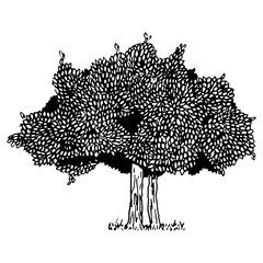 Tree with foliage. Vector illustration of a tree with spring foliage. Hand drawn doodle deciduous tree.