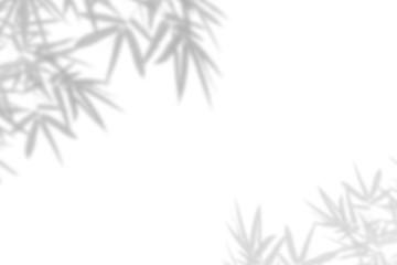 Bamboo leaf shadow on white wall Background. Blank copy space. Wall mural