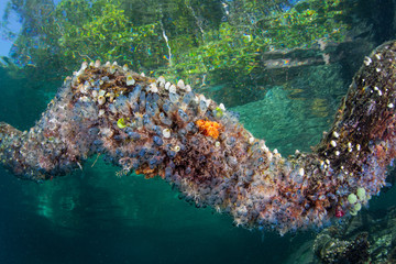 Colorful Tunicates on Branch Underwater in Raja Ampat