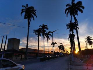 Palms in Brazil