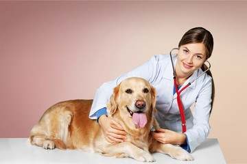 Beautiful young veterinarian with a dog on