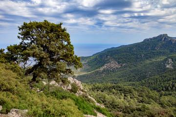 Good looking tree in the Serra de Tramuntana, Mallorca, Spain