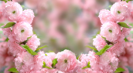 Wall Mural - Mysterious spring floral background and frame with blooming pink sakura flowers