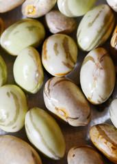 Macro of fava beans