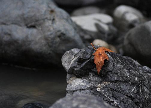 Fall leaf on the rocks