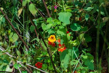 Flores color rojo y amarillo en un fondo verde frondoso