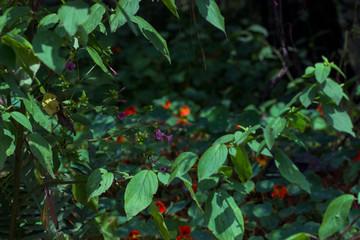Hojas verdes contrastadas por flores de colores en el fondo