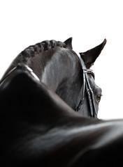 Equine portrait black horse