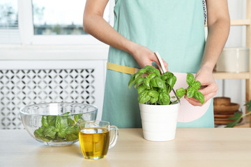 Woman cutting green basil in pot at kitchen table