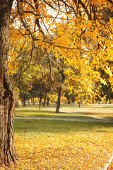 Picturesque landscape of autumn park on sunny day
