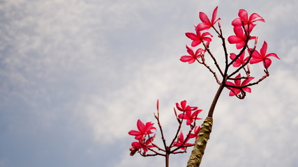 Flower in Garden, Bangkok, Thailand