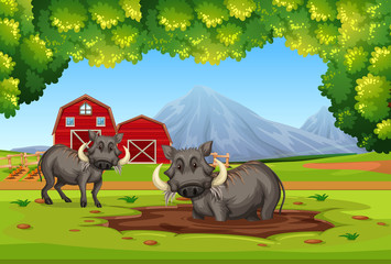 Two warthog in nature