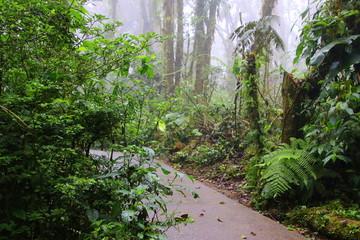 The path through the rain forest.