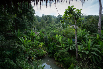 Tropical Jungle included banana tree and coconut with native tree in phuket city,southern of Thailand with small pond in the front  / landscape / background concept