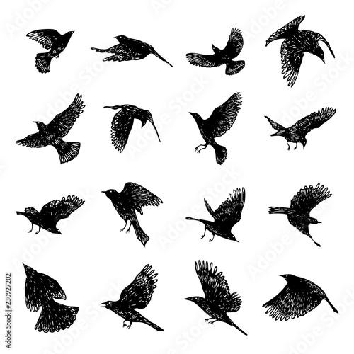 b41f449e52bc3 Set of black raven birds, hand drawn crows flock. Drawing sketch. Vector.