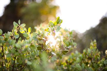 Sun shining through plants
