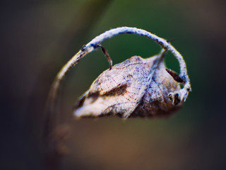 A dry leaf curled up on a tree