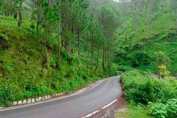Indian Mountain Roads with green pine tree on both sides