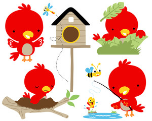vector set of red bird cartoon illustration