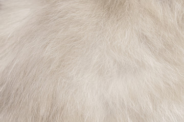 Cat fur patterns texture ,White or gray background