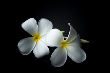 Tuinposter Frangipani White Plumeria or frangipani in black background theme
