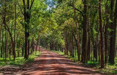 Roads in Huai Kha Khaeng Wildlife Sanctuary, Thailand
