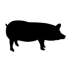 isolated silhouette of a pig