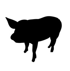silhouette of the pig, isolated