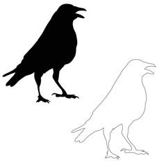 vector, silhouette ravens, birds outlines.