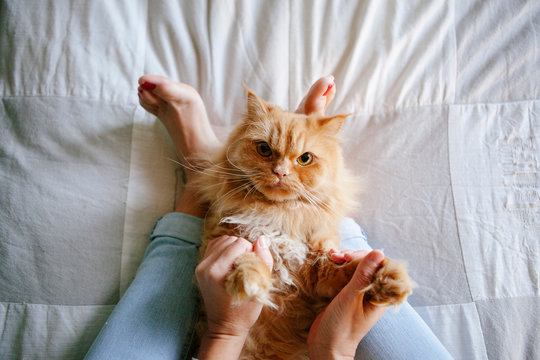 woman playing games with healthy cat