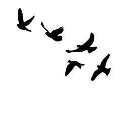isolated silhouette of flocks of birds