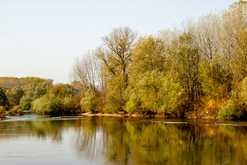 River Great Morava in Cuprija town. Autumn, sunny day, forest near the river
