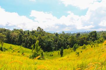 Foto op Canvas Meloen Green tree with grass land forest mountain landscape blue sky views at Khao yai national park Thailand