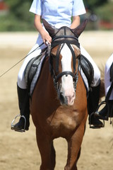Beautiful sport horse with rider under saddle on natural background, equestrian sport