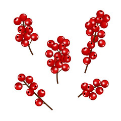 Christmas red berries set, isolated on white background.