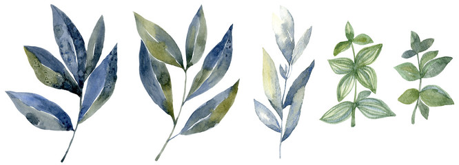 Watercolor set with forest leaf. Wash drawing illustration.