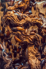 dragon, sculpture, ancient, china, art, asia, stone, statue, animal, temple, wall, religion, culture, architecture, pattern, carving, texture, old, decoration, traditional, travel, nature, religious,