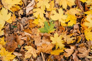 Autumn leaves foliage texture close up nature park