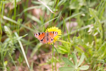 Beautiful spring butterfly sitting on plant