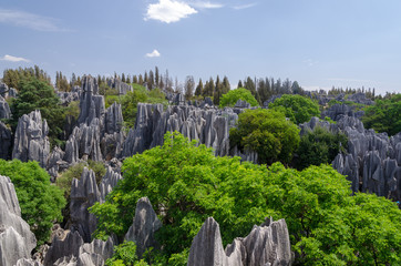 The limestone Stone forest on sunny day, Kunming Yunnan China. Wall mural
