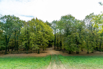 Chemin de l'entrée d'une forêt en Automne