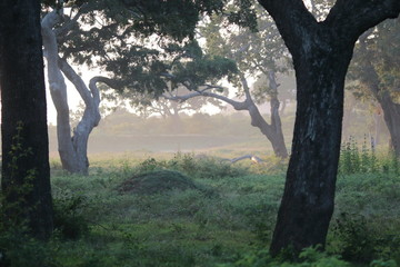 Early morning Yala Safari Park Sri Lanka